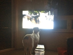 Roo watches whenever a dog comes on TV