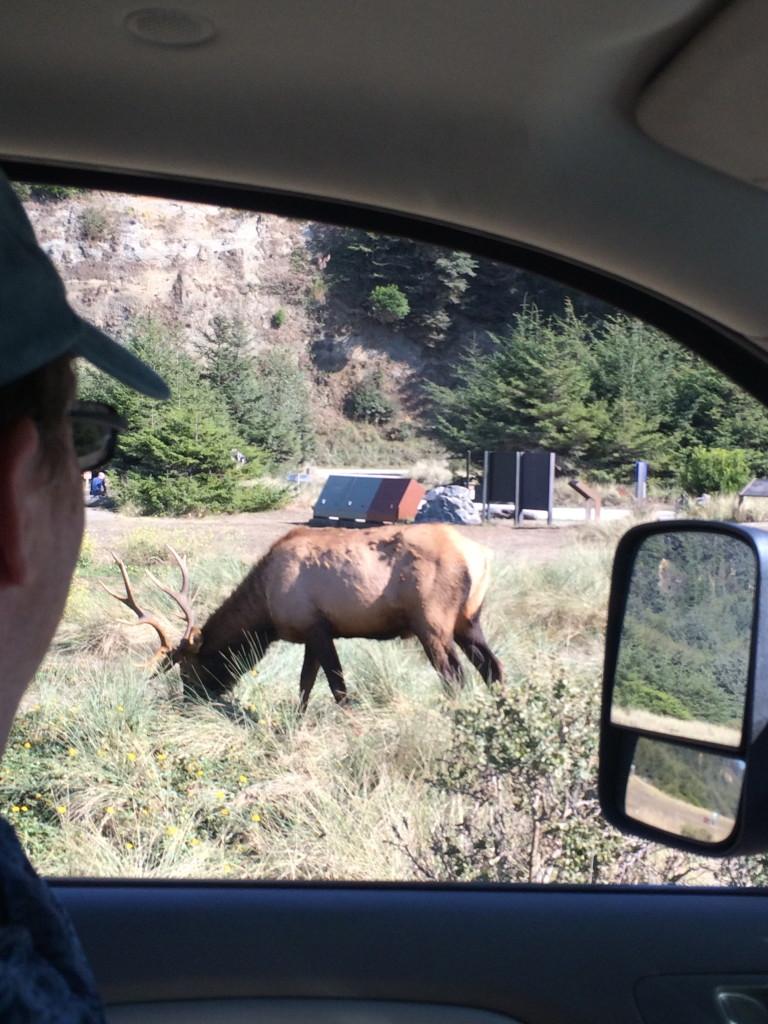 Elk selfie