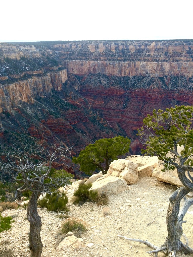 From the South Rim Trail